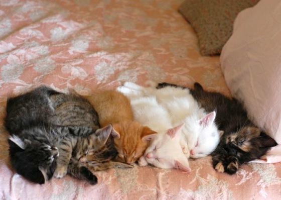kittens26