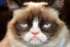 Grumpy Cat not amused